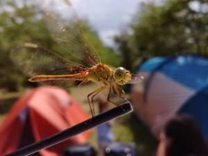 Insecten op de camping